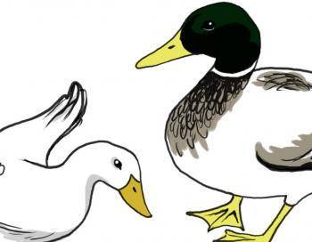 como desenhar um pato