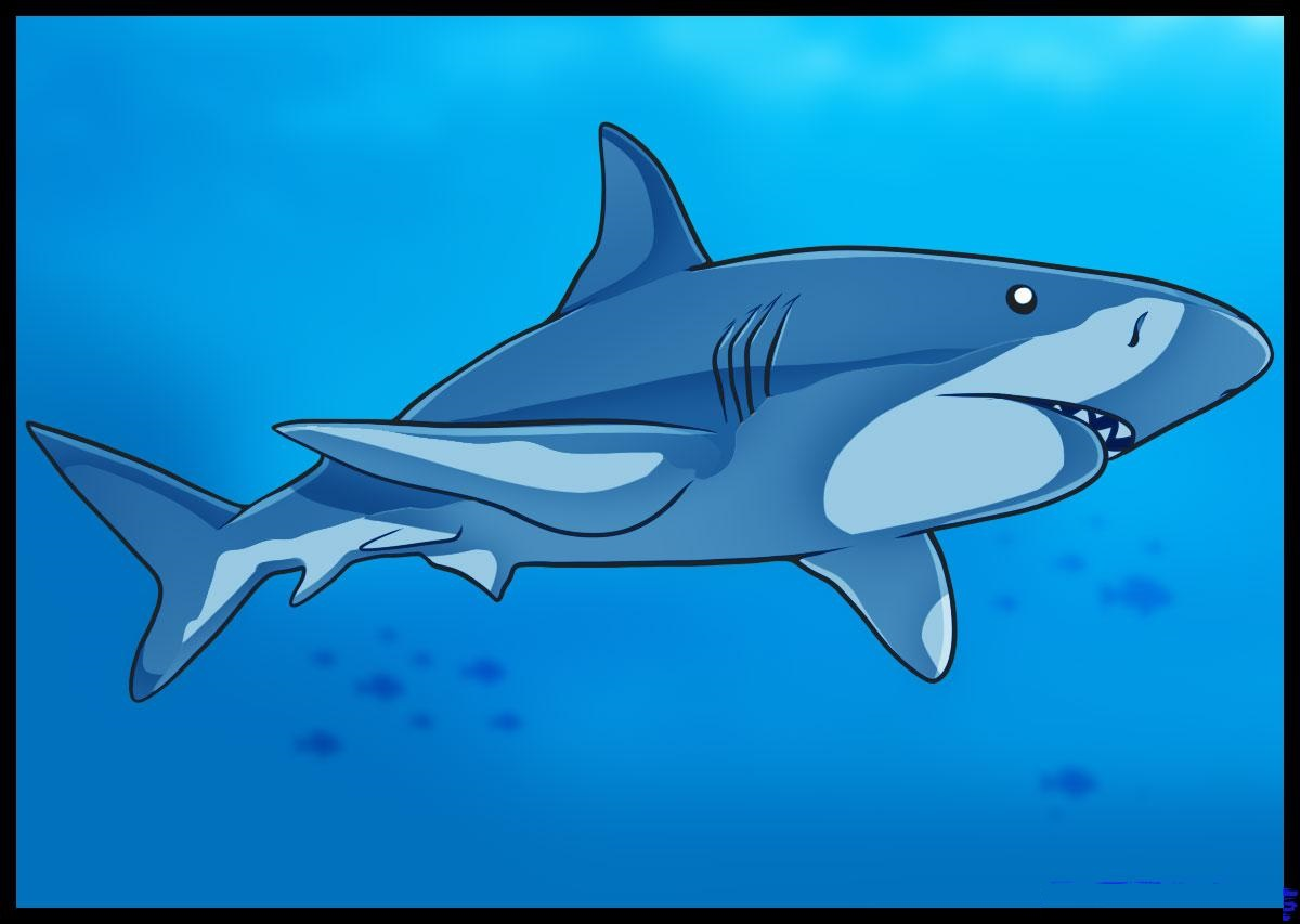 how to draw realistic sharks