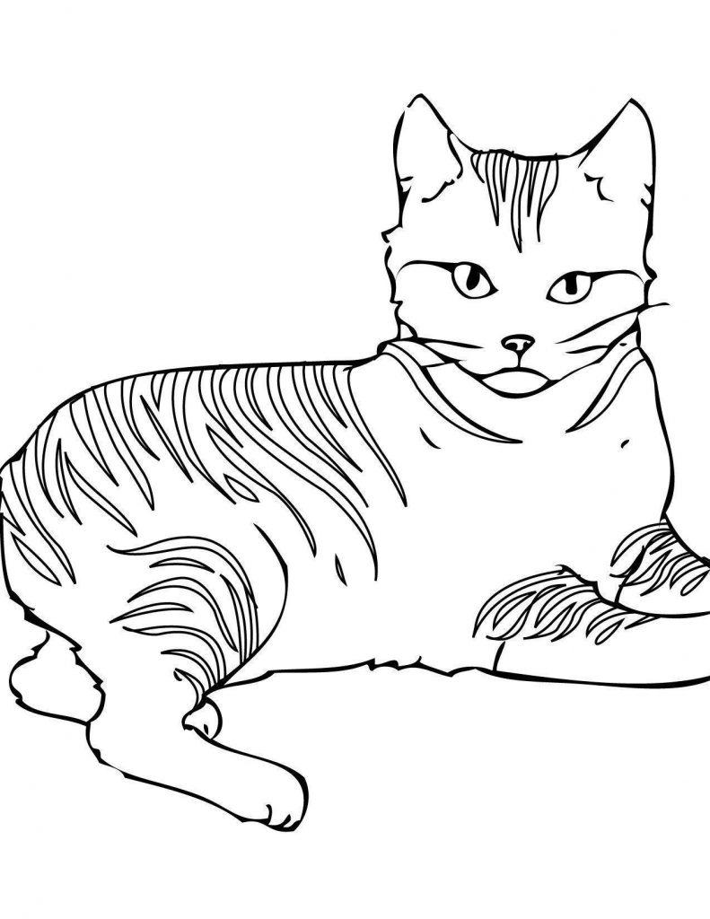 Gato para Colorir e Imprimir