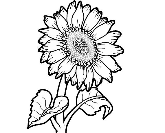 Dibujos De Flores Para Colorear Pintar E Imprimir Flores 6: Flores Para Colorir E Imprimir