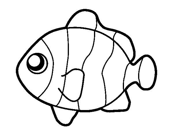 Peixe para colorir e pintar 7 aprender a desenhar for Pagliaccio da disegnare