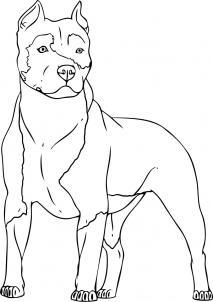 Como Desenhar Um Cachorro Pitbull Aprender A Desenhar