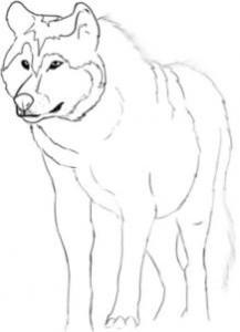 como desenhar um lobo