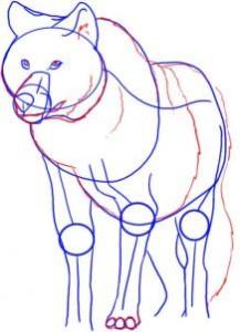 como desenhar lobos