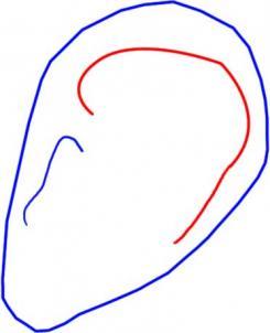 como desenhar uma orelha
