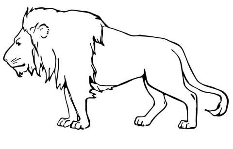 leão para colorir e pintar