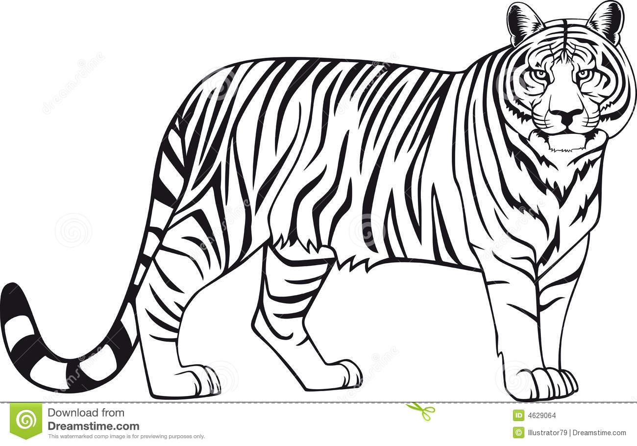 imagens de trigres e leoes para colorir