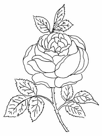 Desenhos de Rosas para Colorir arranjo de rosas