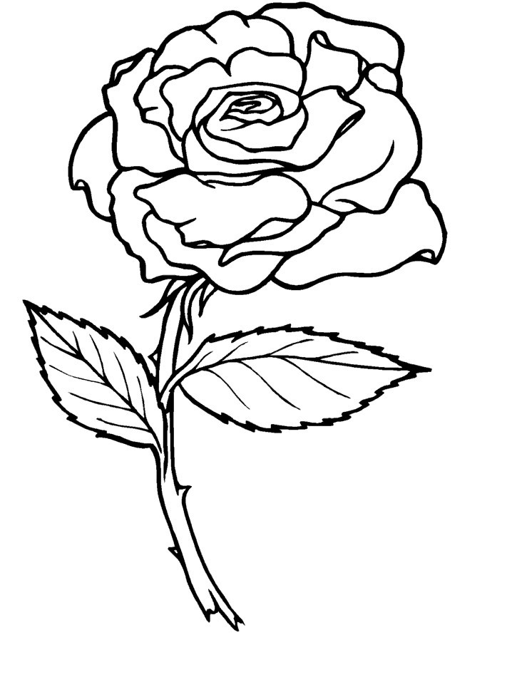 Desenhos de Rosas para Colorir rosa com caule