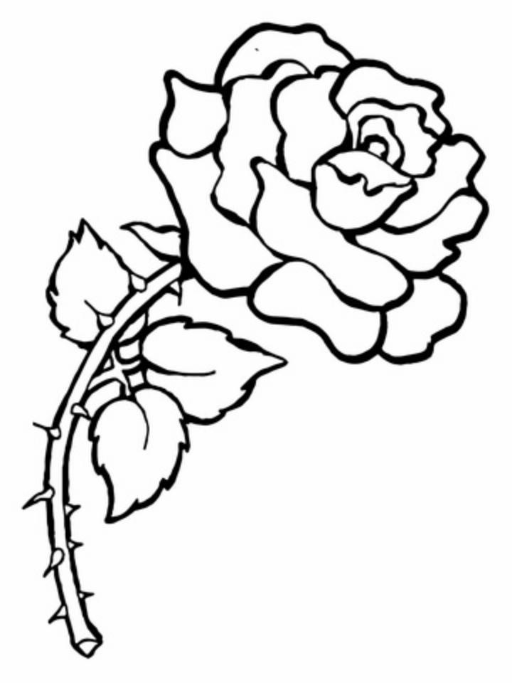 Desenhos de Rosas para Colorir rosa com espinhos