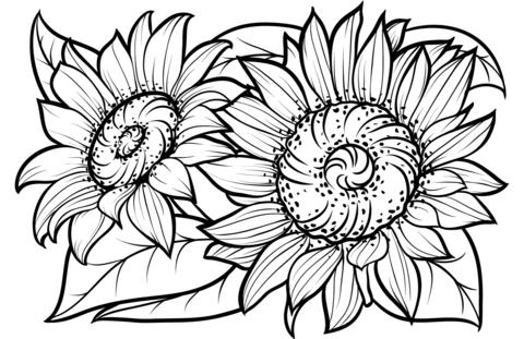 Como Desenhar Flores Passo A Passo