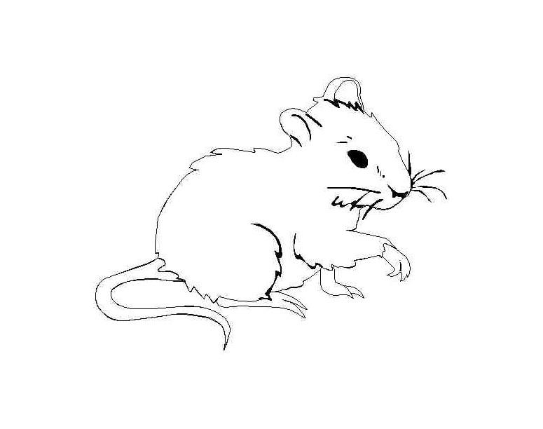 rato para colorir realista