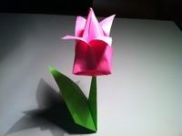 dobradura tulipa
